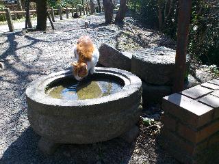 京都34.png