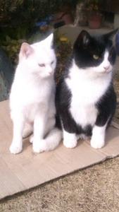 保護猫13.jpg