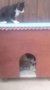 保護猫1.jpg