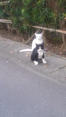 保護猫7.jpg