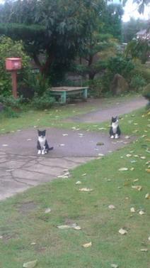 保護猫8.jpg