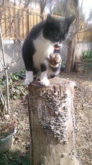 保護猫.jpg