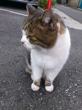 谷中猫.jpg