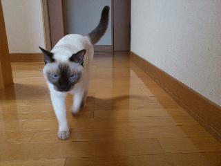 マリア32.JPG